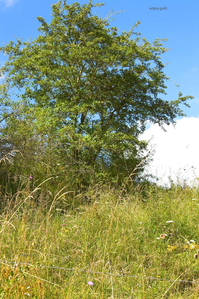 wilde-landschaft-eifel-schwirzheim