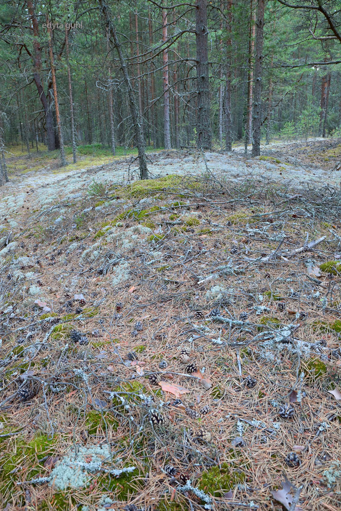 finnischer-wald-bei-pori