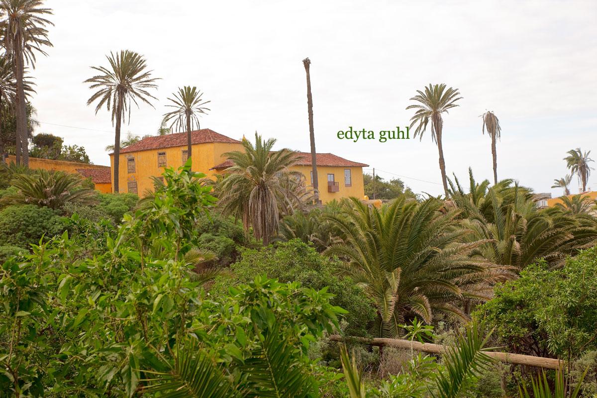 Los Realejos , Teneriffa. Spanien. Edyta Guhl. Bananenplantagen.