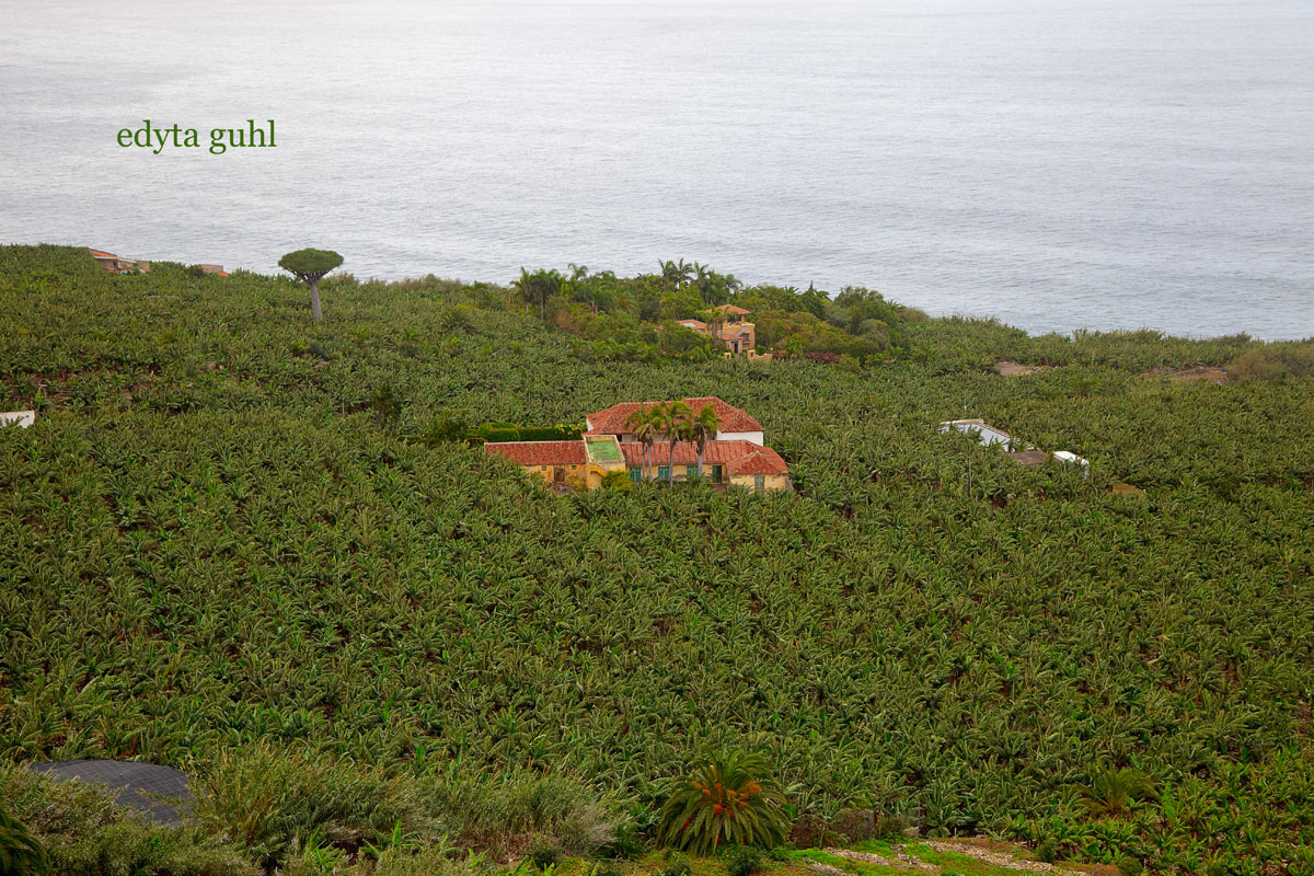Bananenplantagen auf Teneriffa, Spanien. Meine Reisen. Edyta Guhl.