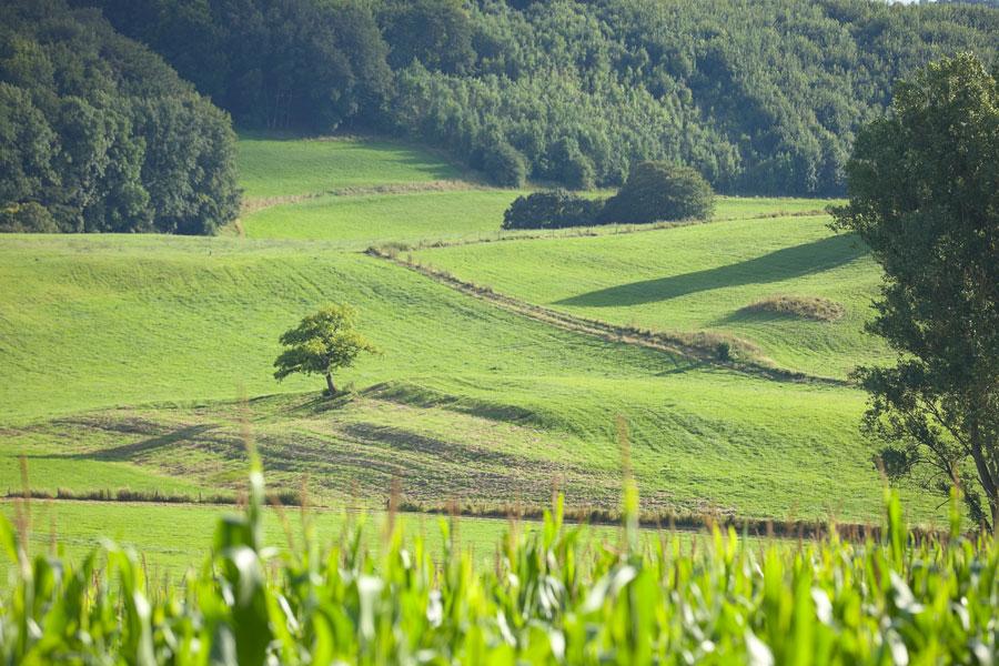 Eifel, Schwirzheim. Landschaft in Deutschland. Edyta Guhl.