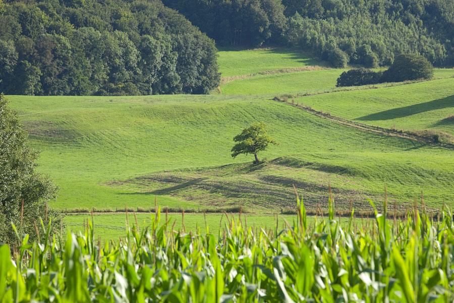 Wunderschöne Landschaft in der Eifel. Grüne Eifel. Edyta Guhl.