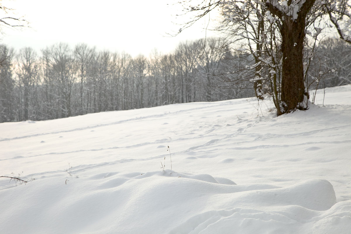 Winterlandschaft. Niederschlesien, meine Heimat. Edyta Guhl.