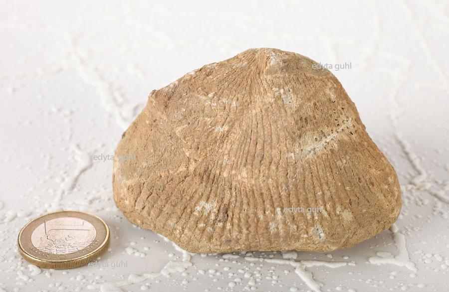 fossilien-eifel