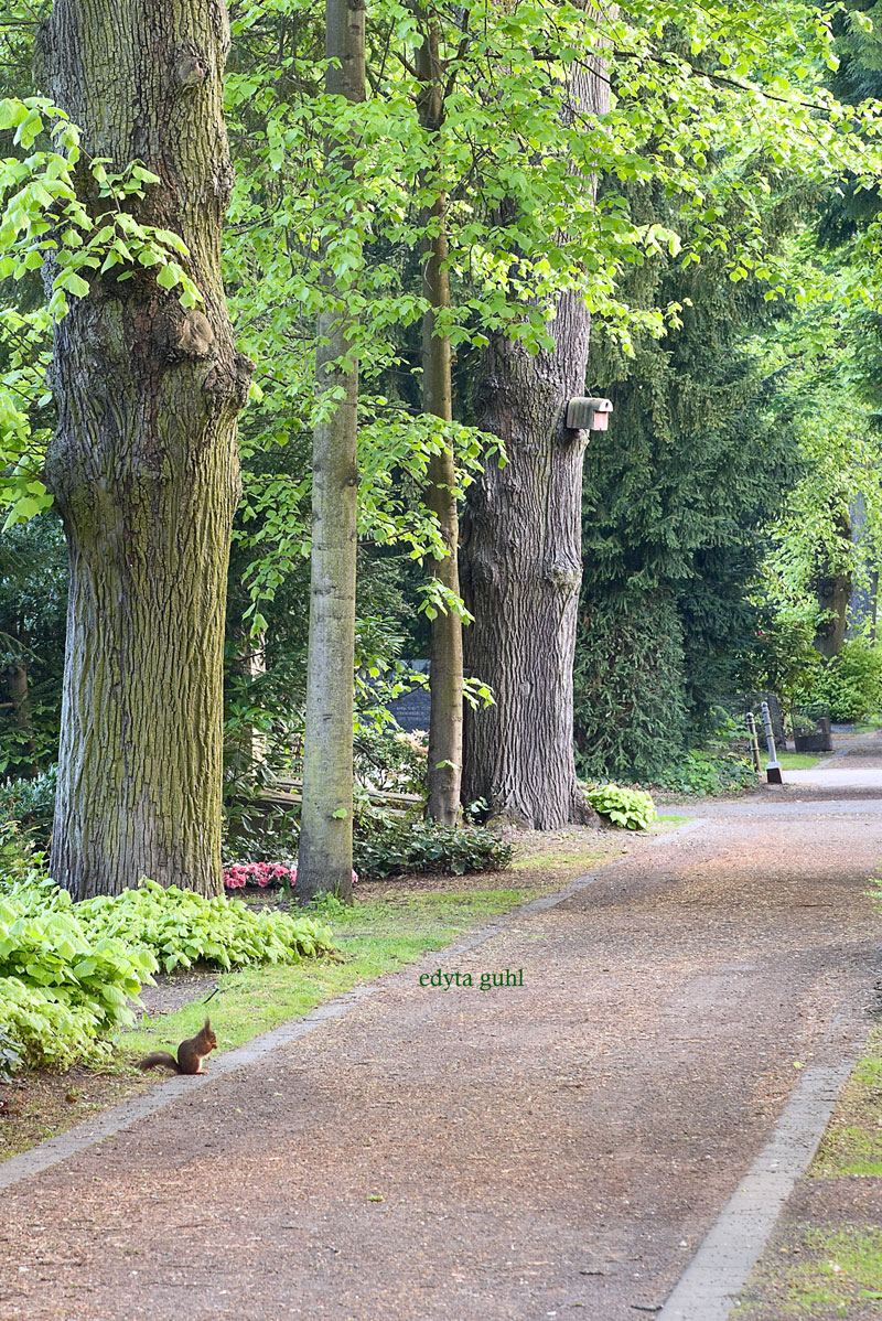 Spaziergang durch Melaten. Edyta Guhl.