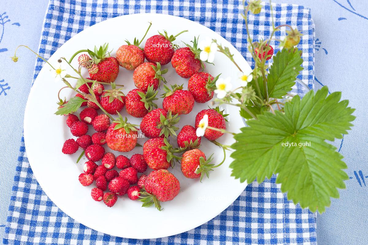 Erdbeeren und Walderdbeeren. Edyta Guhl.