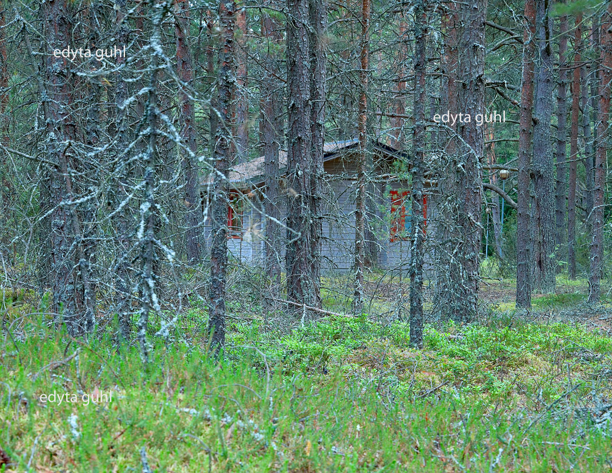 Laube im Wald. Skandinavien. Edyta Guhl.