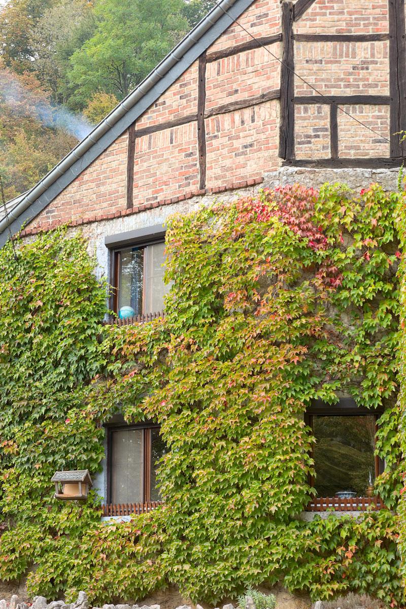 Efeu bewachsene Häuser in Durbuy, Belgien. Edyta Guhl.