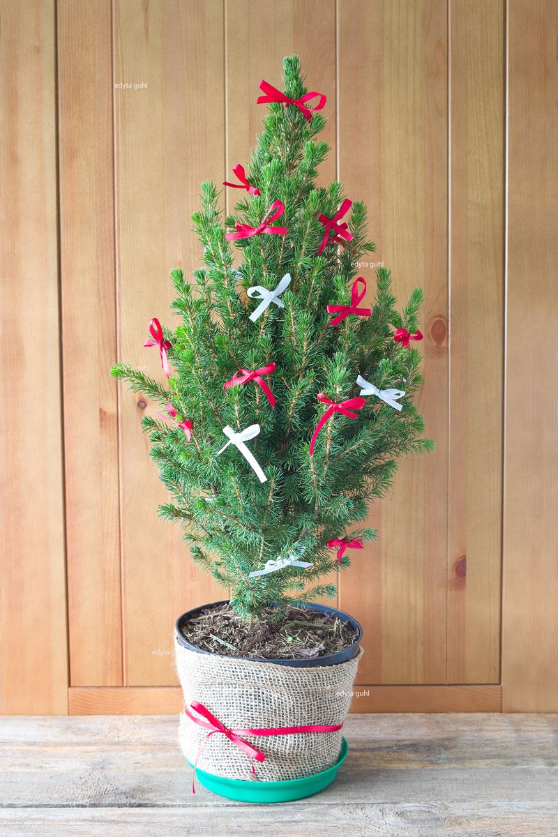 Frohe Weihnachten. Mein Weihnachtsbaum. Edyta Guhl.