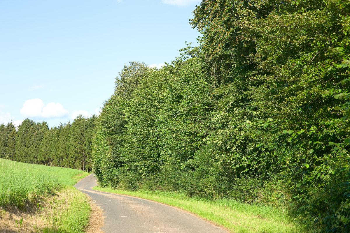 Eifel, Schwirzheim