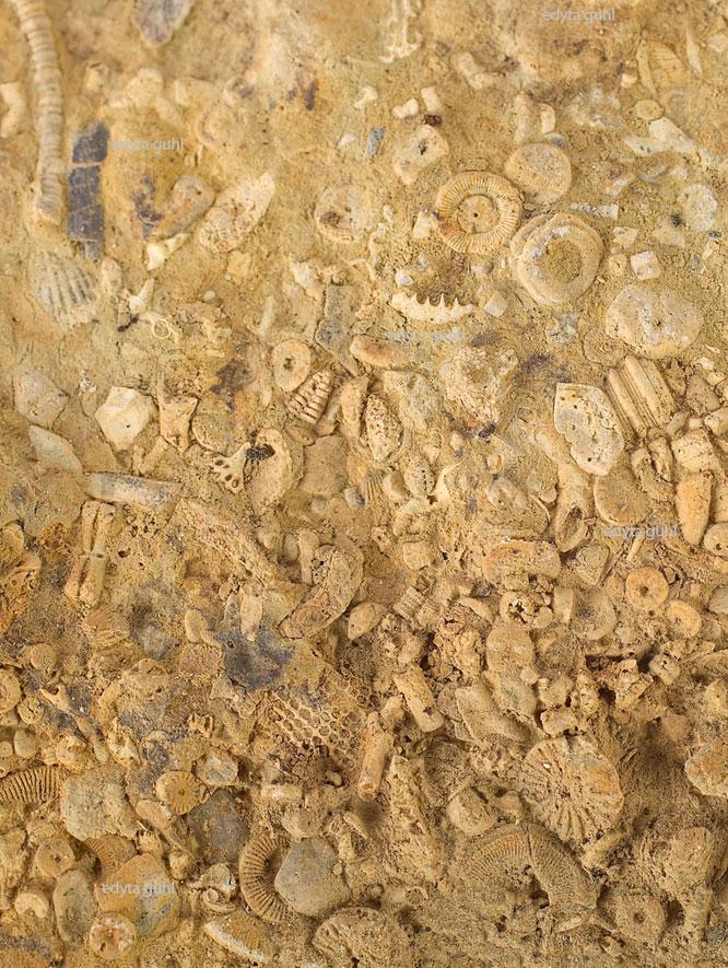 magische-eifel-fossilien