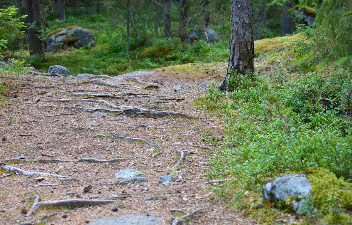 waldboden-finnland
